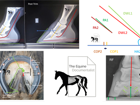The Influences on Shoeing Cycle