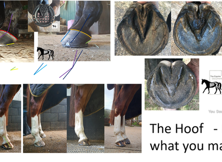 The Hoof - It Is What You Make It