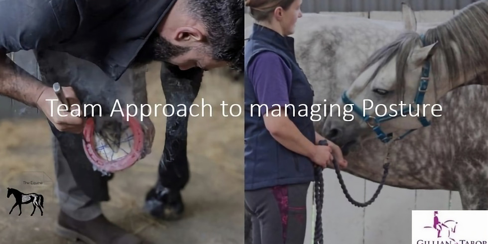 Team Work approach to managing posture in the horse: Farrier and Physio