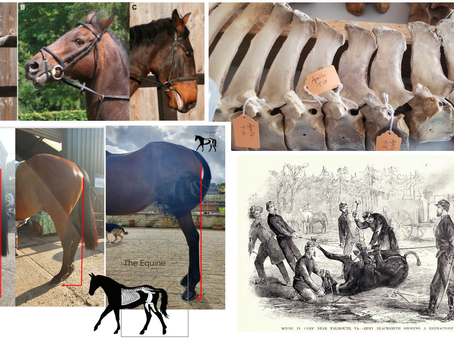 Recognising pain in the horse