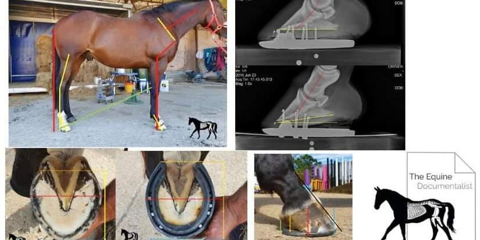 Conformation and shoe removal course