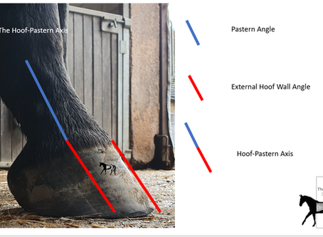 Hoof Pastern Axis - Influential Factors