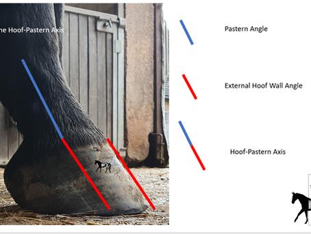 Hoof Pastern Axis - Influential Factors