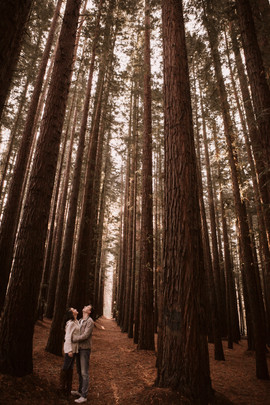 Redwood Forest family photo