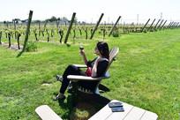 Newport Vineyards: detrás de los campos de uva, un lugar exquisito que visitar