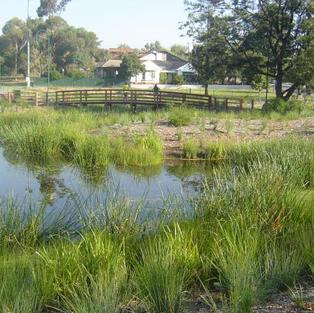 Treyvaud Reserve Wetland