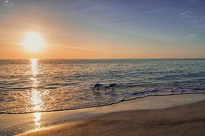 Estero FL.jpg