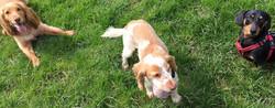 dog walking plymouth - 8