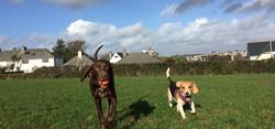 dog walking plymouth - 7