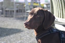 dog walking plymouth - 6