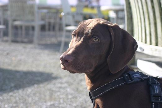 dog walking plymouth