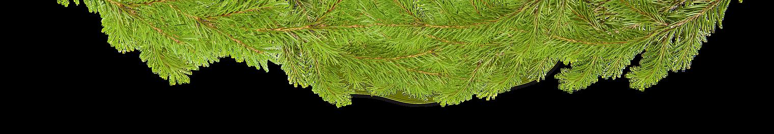 елки.png