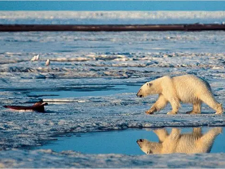 On Recycling and Polar Bears