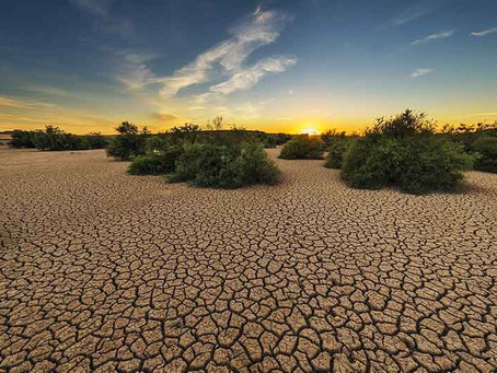 10 Simple Ways to Conserve Water