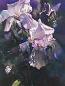 Spotlight by Carole Keller