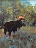 Afternoon Moose