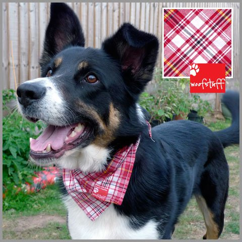 Scottish Patterned Bandana