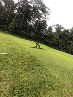 Pangkalan Jati 2021 R1 Lizard fight