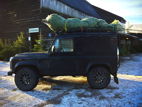 landrover with tree.jpg