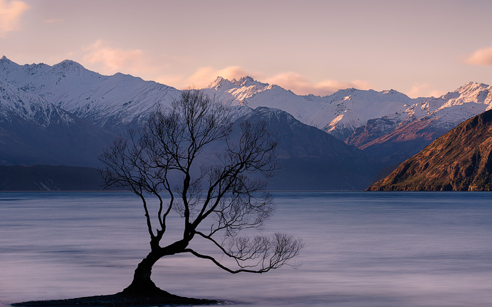 nz-new-Zealand-wanaka-wanakatree.jpg