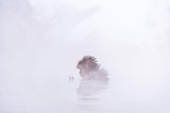 jigokundai-snowmonkey-niigata-macaque.jpg