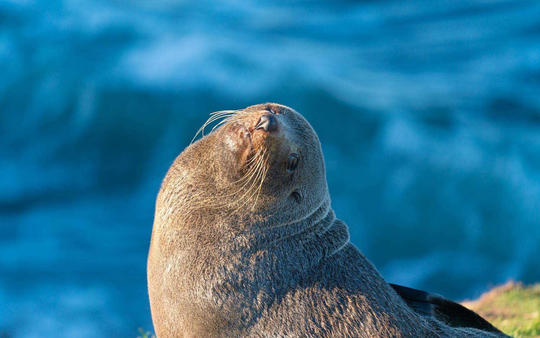 nz-new-Zealand-seal.jpg