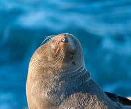 Seal basking in the sun