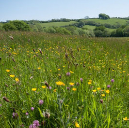 APR 2014: Wildlife-Rich Grasslands On Decline