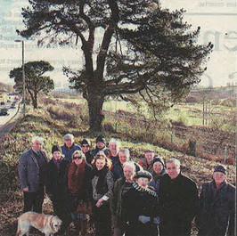 FEB 2013: Council Vandals Destroy Beautiful Cedars