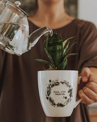 woman-watering-plant-in-cup-3050832.jpg