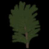 Tall Spruce förgrena 1