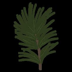 Pine Spruce Takken 1