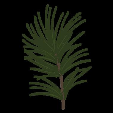 Branche Pin 1