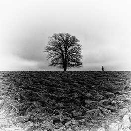 The Black Tree (Eysins 2016)