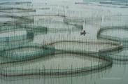 Granjas de peces en Xiapu, Fujian