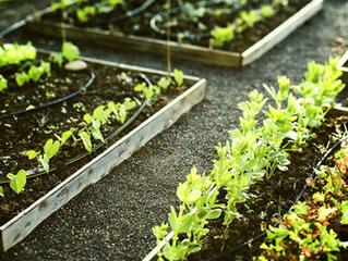 Növénytársítás