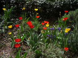 Évelőágyás tavasszal