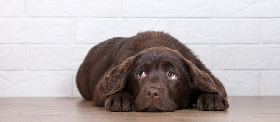 Help for Anxious Dogs