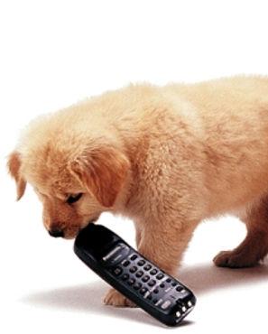 pup_phone.jpg
