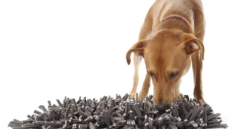 Top Five Snuffle Mats for Dogs in 2021