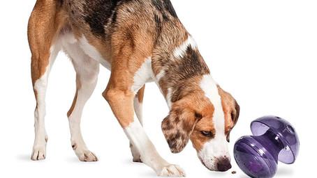 Product Review: PetSafe Busy Buddy Magic Mushroom Dog Toy