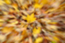Herbst Gaisberg (23).jpg