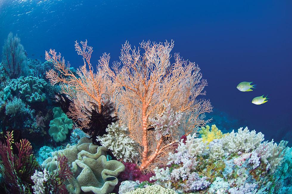 09806-feature2-reef.jpg