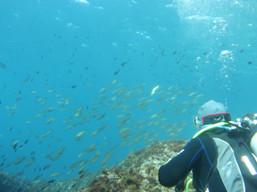 Nettoyage des fonds marin
