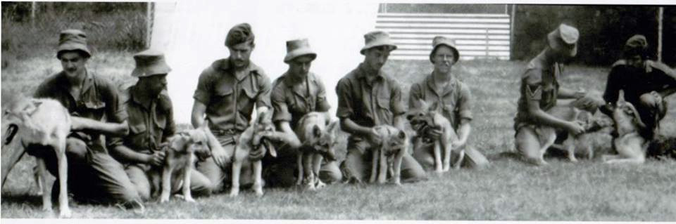 "Dog handlers were responsible to do ""puppy"" training to ensure that dogs were disciplined and primed for battle training as the various phases of training commenced"