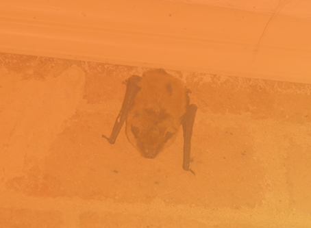 How To Keep Bats From Roosting Under Your Porch or Covered Areas