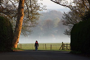 A Dog Walker in Barlaston, Staffordshire