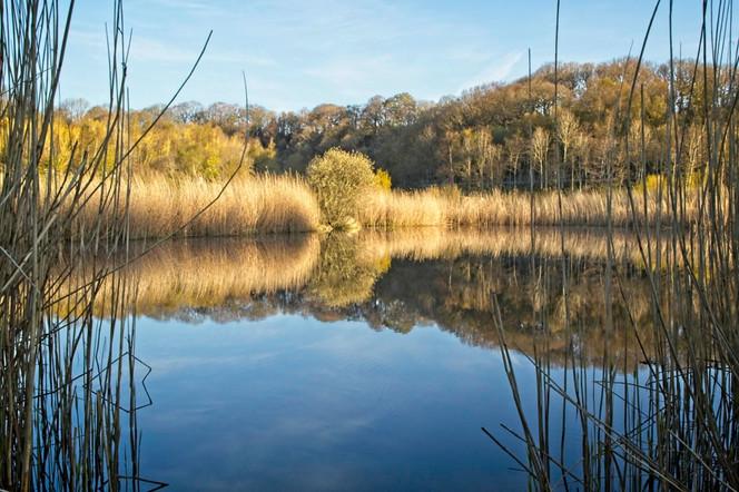 Clockburn Lake Reflections