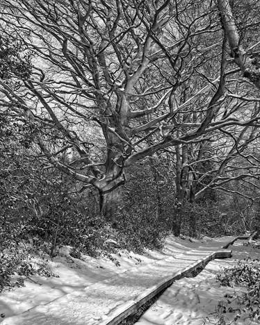 Winter Woodland Walk, Thornley Woods