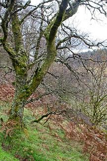 Ettrick Valley Woodland